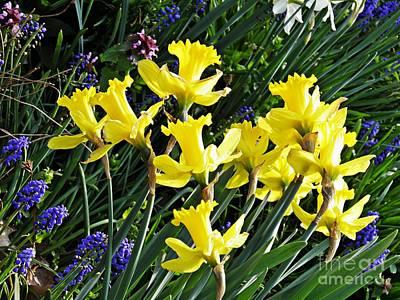 Photograph - Daffodils by Sarah Loft