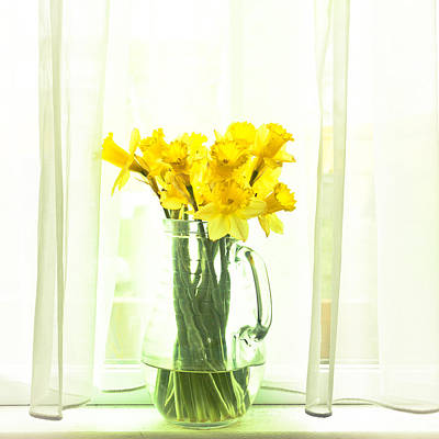 Water Pitcher Photograph - Daffodils by Tom Gowanlock