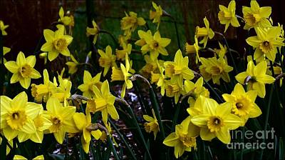 Photograph - Daffy Forest by Julia Hassett
