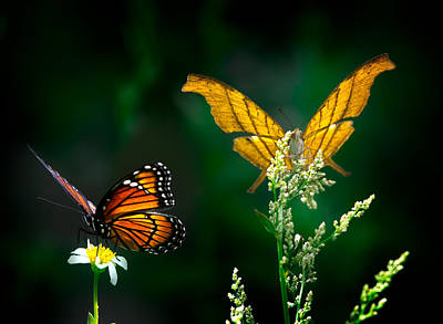 Beauty Mark Photograph - Daggerwing And Monarch by Mark Andrew Thomas