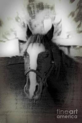 Animal Portraiture Mixed Media - Daguerreotype Horse by Doc Braham