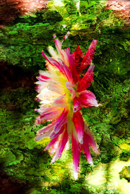 Photograph - Dahlia - Flower - Garden by Marie Jamieson
