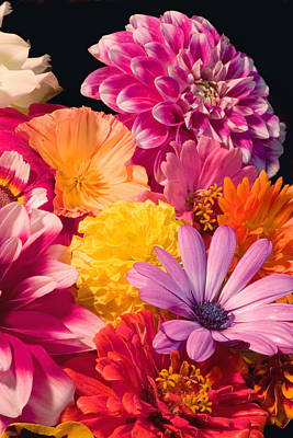 Dahlia African Daisy Zinnia Flowers Art Print