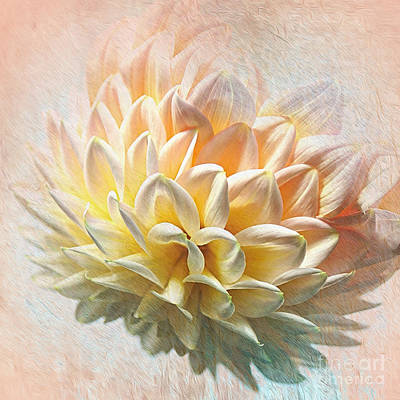 Photograph - Dahlia Art by Kaye Menner