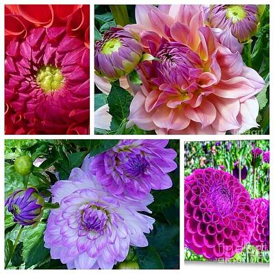 Photograph - Dahlia Best Collage by Susan Garren