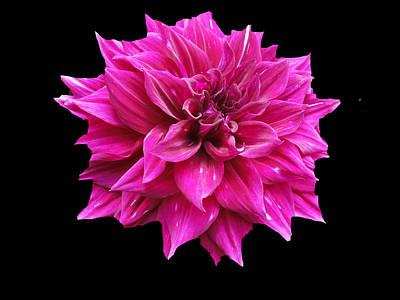 Photograph - Dahlia Blossom by Frederic Kohli