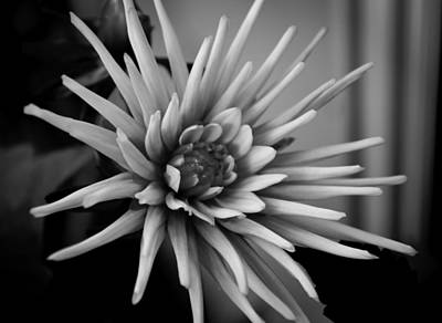 Photograph - Dahlia by Bonnie Leigh Delar