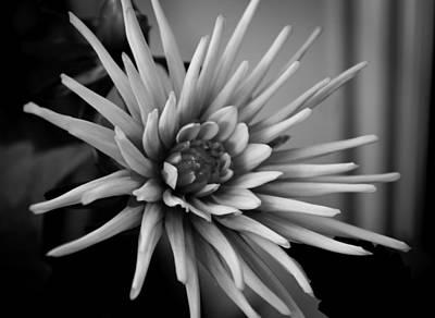 Photograph - Dahlia by Bonnie Leigh Delar