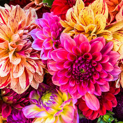 Dahlia Bouquet Number 3 Art Print