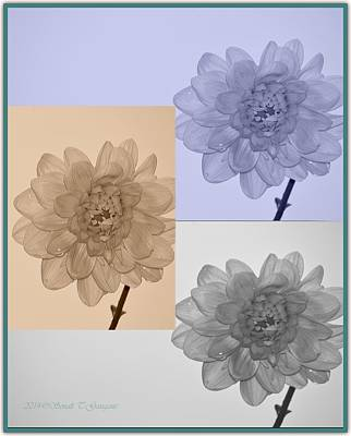 Discount Codes Wall Art - Photograph - Dahlia Collage by Sonali Gangane