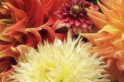Dahlia Delight Art Print by Wes and Dotty Weber