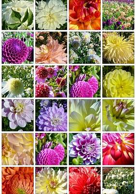 Photograph - Dahlia Delights by Susan Garren