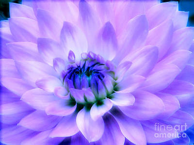 Floral Photograph - Dahlia Dream by Rory Sagner