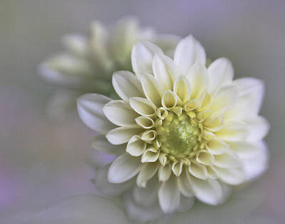 Photograph - Dahlia Dreams by David and Carol Kelly