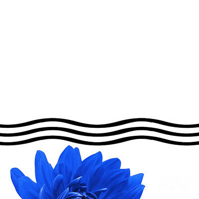 Dahlia Flower And Wavy Lines Triptych Canvas 1 - Blue Art Print by Natalie Kinnear
