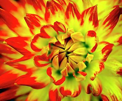 Floret Photograph - Dahlia Flower by Ian Gowland
