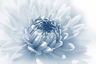 Photograph - Dahlia Flower Soft Blue by Jennie Marie Schell