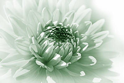 Photograph - Dahlia Flower Soft Green by Jennie Marie Schell