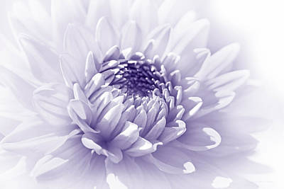Photograph - Dahlia Flower Soft Purple by Jennie Marie Schell