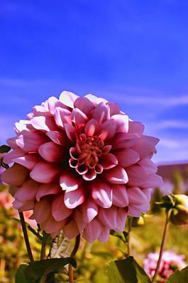 Photograph - Dahlia by Graham Hawcroft pixsellpix