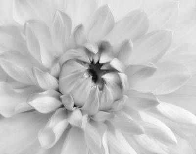 Photograph - Dahlia In Black And White by David and Carol Kelly