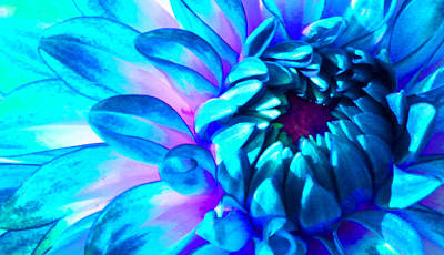 Photograph - Dahlia In Pastel by James Hammen