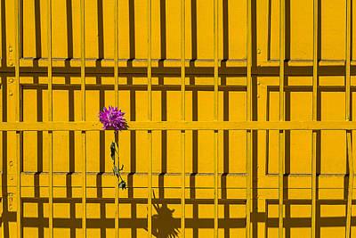 Dahlia In Yellow Gate Art Print