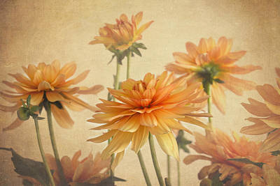 Photograph - Dahlia Menagerie  by Kim Hojnacki