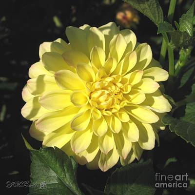 Photograph - Dahlia Named Hy Clown by J McCombie
