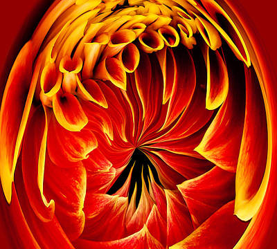 Photograph - Dahlia On Fire by Jean Noren