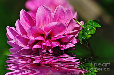 Photograph - Dahlia On Water by Kaye Menner