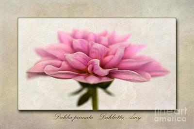 Macro Digital Art - Dahlia Pinnata  by John Edwards