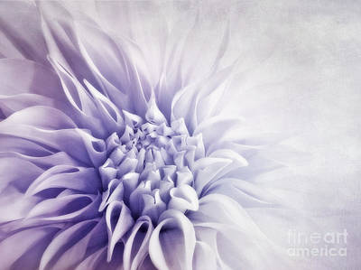 Single Flower Photograph - Dahlia Sun by Priska Wettstein
