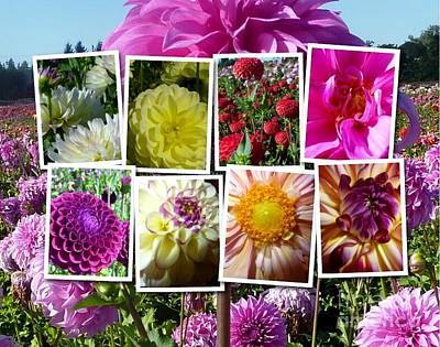 Photograph - Dahlia Time Collage by Susan Garren