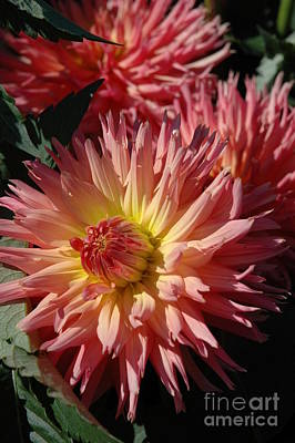 Art Print featuring the photograph Dahlia Viii by Christiane Hellner-OBrien