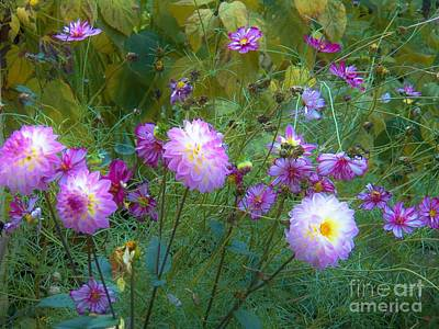 Photograph - Dahlias And Cosmos  by Judy Via-Wolff
