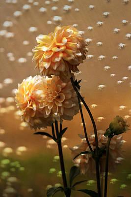 Photograph - Dahlias Loving Rain - Garden by Marie Jamieson