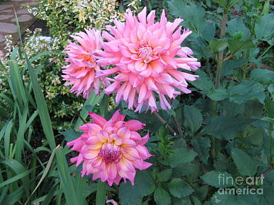 Photograph - Dahlias by Marlene Rose Besso