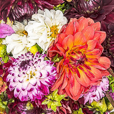 Dahlias Number 4 Art Print