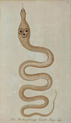 1757 Painting - Dahl's Whip Snake by Celestial Images