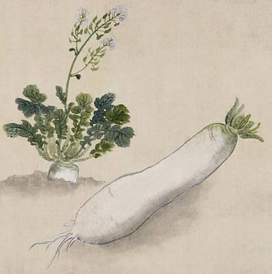 Agriculture Digital Art - Daikon Radish by Aged Pixel