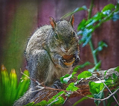 Photograph - Daily Visitor by Hanny Heim