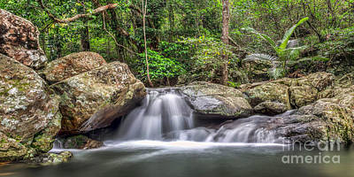 Photograph - Daintree Rainforest by Shannon Rogers