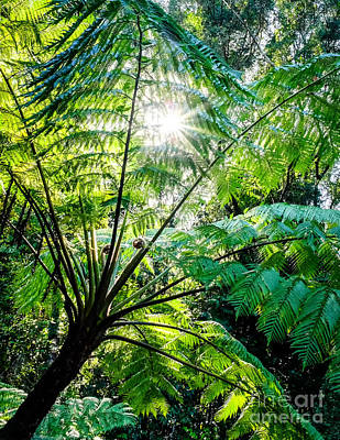 Photograph - Daintree Rainforest Sunlight by Silken Photography
