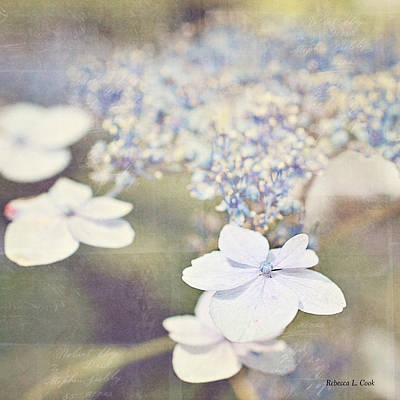 Photograph - Dainty by Bellesouth Studio