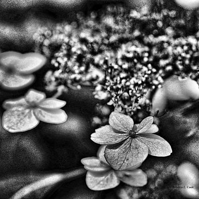 Black Background Mixed Media - Dainty Black And White by Bellesouth Studio