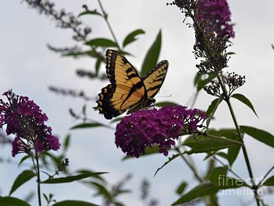 Art Print featuring the photograph Dainty by Judy Wolinsky