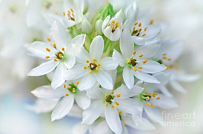Dainty Spring Blossoms Art Print by Kaye Menner