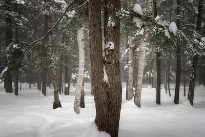 Photograph - Dainty Tree by Darylann Leonard Photography