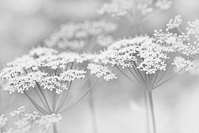 Photograph - Dainty White Flowers Gray by Jennie Marie Schell